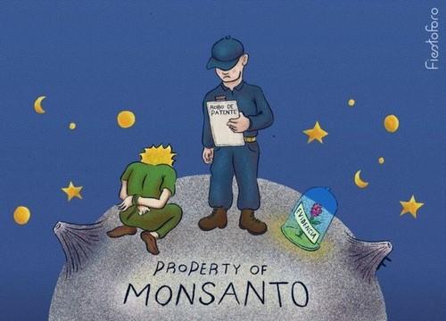 Não às patentes sobre sementes