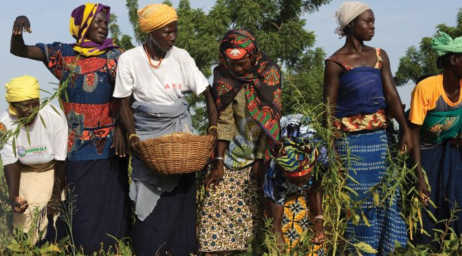 Jantar Popular: Burkinabè Bounty – Agroecologia no Burkina Faso