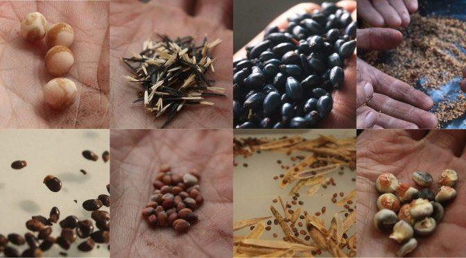"""24 Fev: Encontro da Sementeca """"Germinação – Acordar a Semente!"""""""