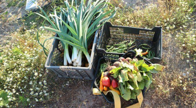 Primavera Agroecológica promove o debate para a transição agroecológica em Portugal de 21 de Março a 1 de Maio de 2021